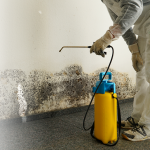 Mold Removal & Remediation Long Island NYC